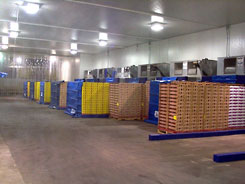 Nine Superflow #LA32 Cool 108 Pallets of Strawberries